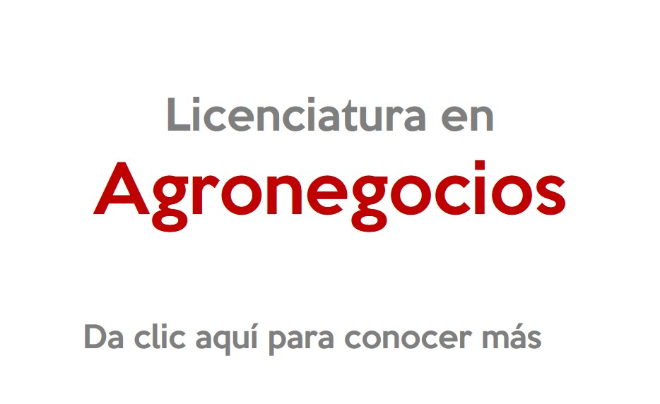 universidad-inforce-comitan-licenciatura-en-agronegociosl.jpg